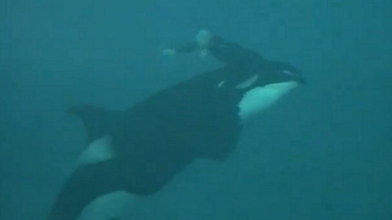 submerged killer whale - photo #7