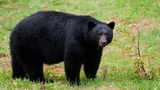 Bear spotted in College Park