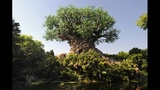 New show to debut at Animal Kingdom