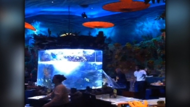 Disney fish tank bursts