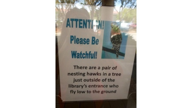 Hawk warning