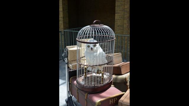 owl-jpg.jpg_26847346