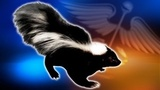 Rabies alert issued for part of Brevard County