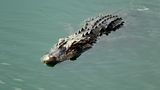 Florida alligator leaps into tourists' airboat