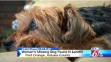 Family of missing dog found in Port Orange landfill petitions for animal…