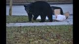 Orange County considering bear-proof trash cans