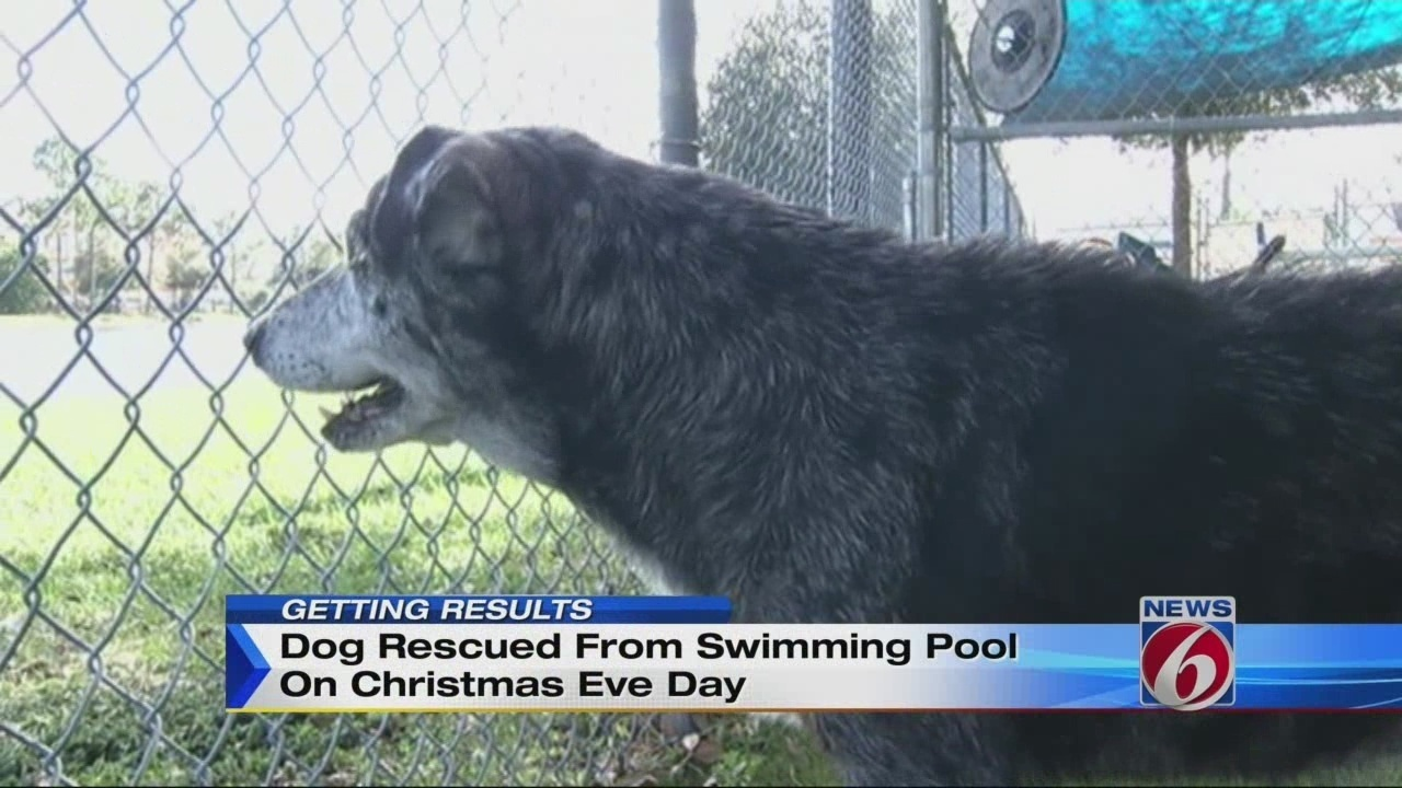 Dog Rescued By Firefighters From Pool Heads To Foster Home