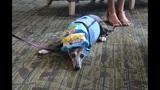Therapy dog celebrates 15th birthday raising money for Fla. Hospital pet program