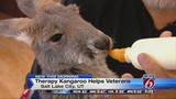 Therapy kangaroo used to help veterans