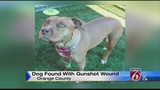Dog found in Orange County neighborhood with gunshot wound