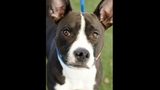 Pets of the week for February 14