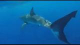 Teens capture close encounter with great white shark off Central Fla. coast