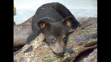 Rescued bear cub thriving at Tampa zoo
