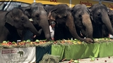 Ringling's last 11 touring elephants retire to Central Florida