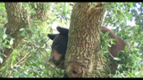 WATCH LIVE: Police issue warning after bear spotted in College Park