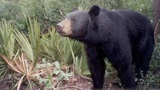 Police issue warning after bear spotted in College Park