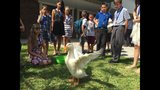 Duck highlights Melbourne elementary school graduation ceremony