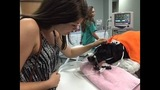 Dog recovering from coral snake bite after protecting Oviedo home