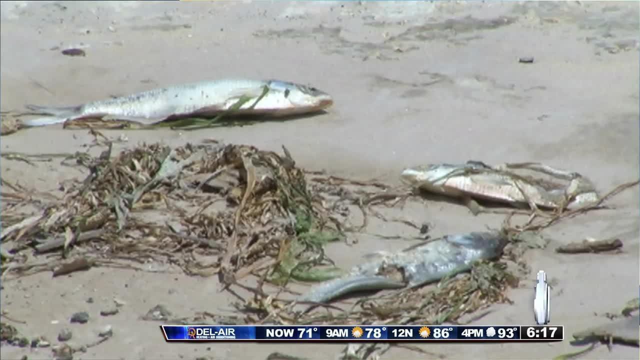 Dozens of dead fish found in orlando lake for Fish at 30 lake