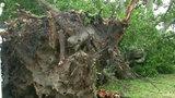 Storm topples trees, power lines in Winter Garden