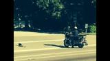Altamonte Springs officer helps ducklings cross the road