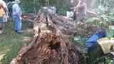 Hurricane Matthew yard waste pickup could take 45 days