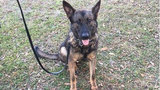 K-9 Forrest was killed by friendly fire, FDLE says