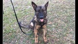 WATCH LIVE: Volusia County Sheriff's Office processional for K-9 Forrest