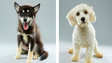 Eight local shelter puppies will be featured in this Puppy Bowl
