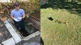 Ducklings rescued from storm drain in Orange County
