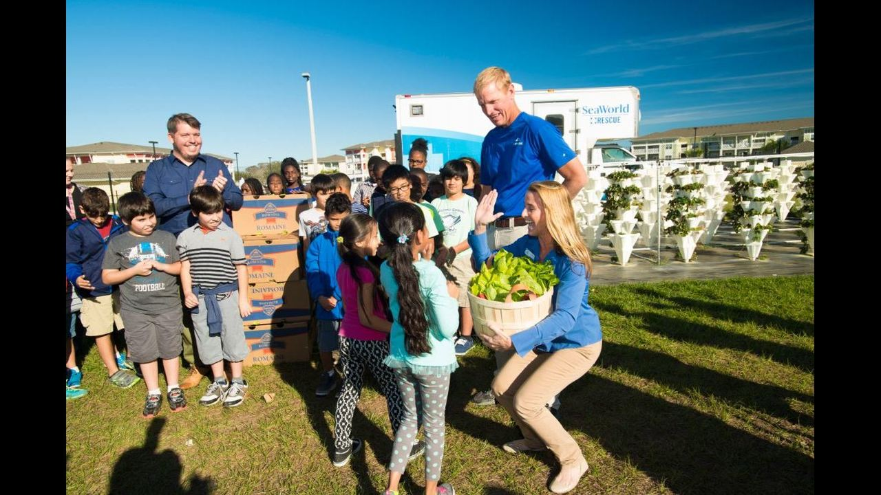 Elementary Students Lettuce Garden Feeds Recused Manatees At