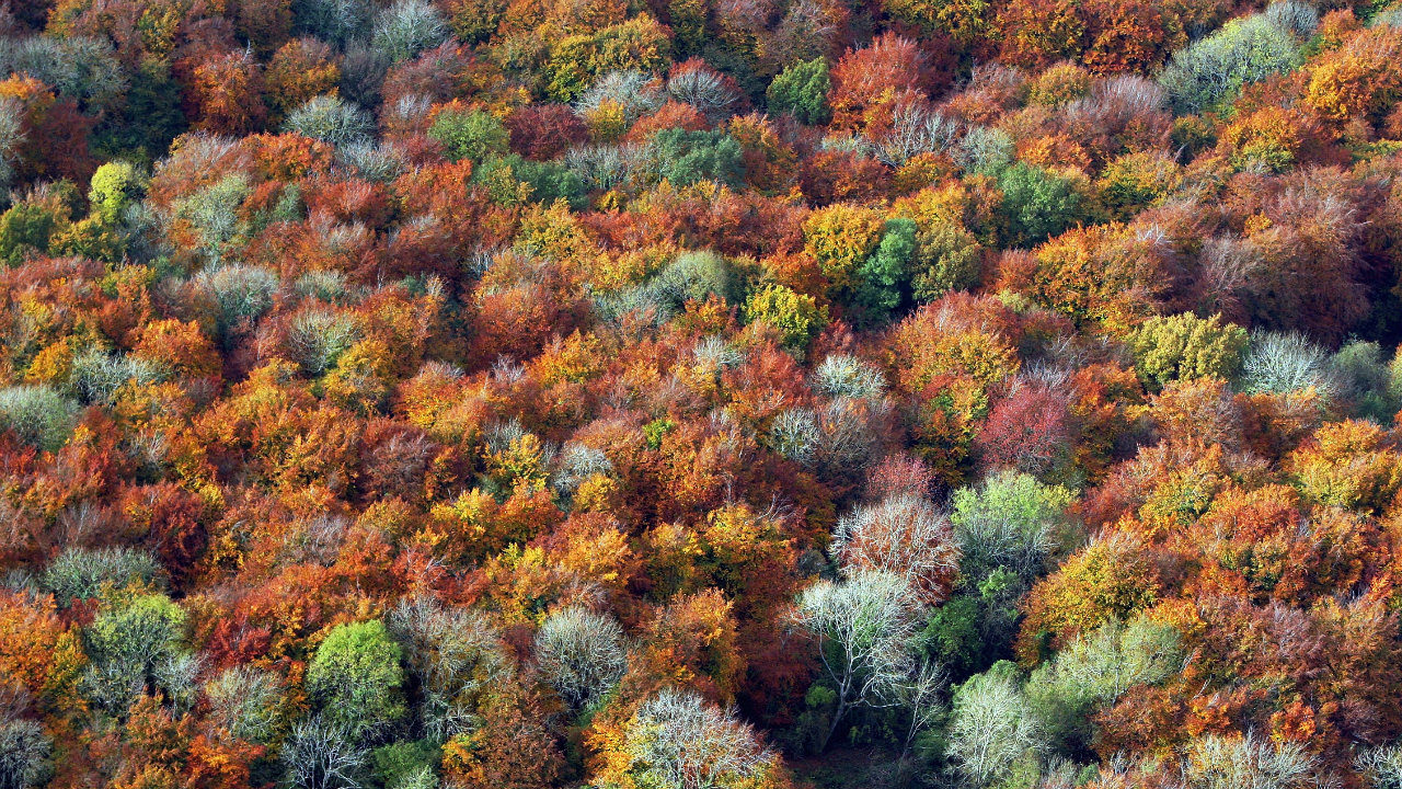 Turning over new leaves: Best places in U.S. to view fall colors