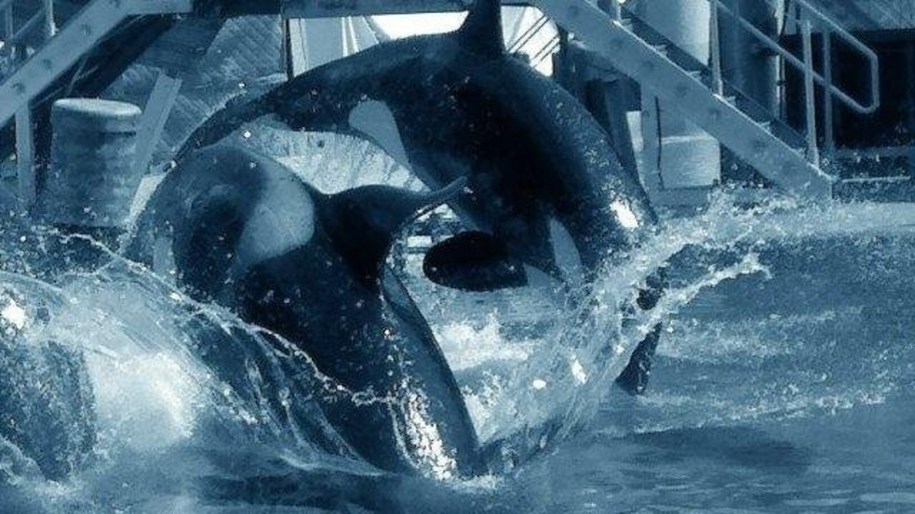 seaworld-whales-jpg_189597_ver1.0_1280_720 SeaWorld CEO Joel Manby steps down