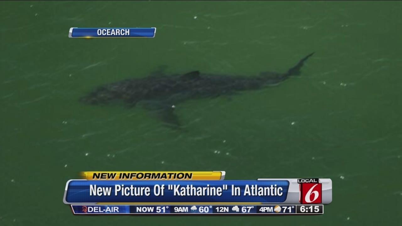 Great White Shark Katharine Spotted On Daytona Beach Coast