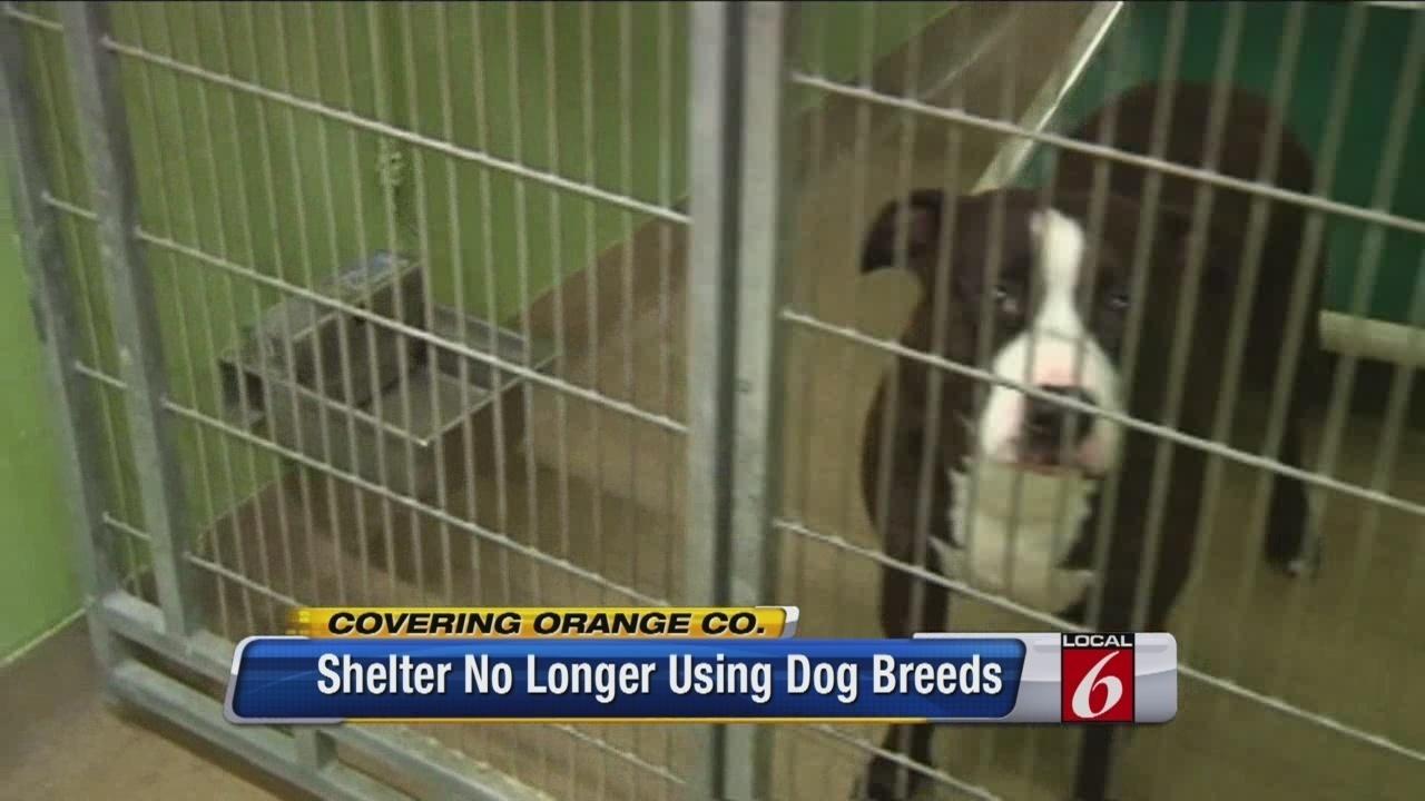 Orange County Animal Services Dogs