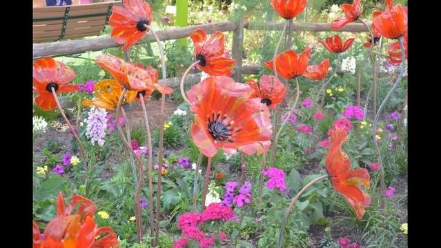 oz poppies close_19207806
