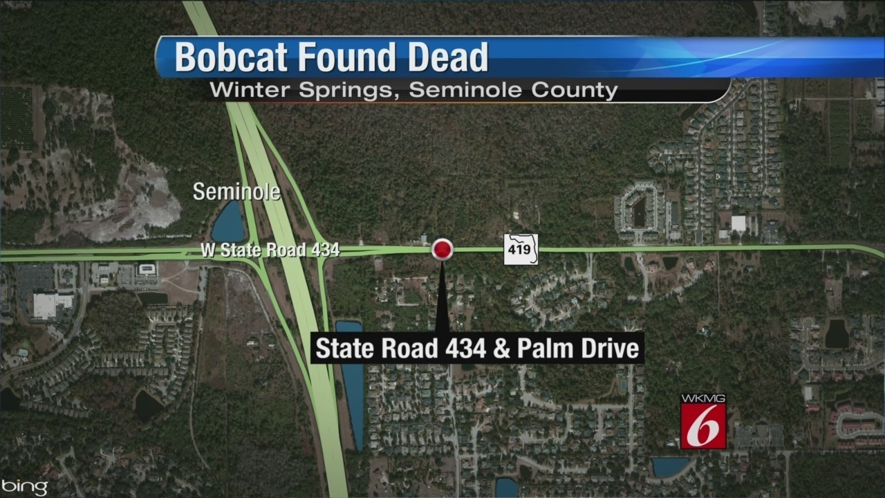 Seminole State Oviedo Campus Map.Dead Bobcat Found Along Busy Roadside In Winter Springs