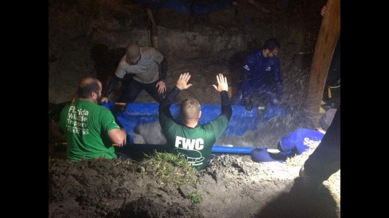 3 Years Later, Rescuers Reflect On 19 Manatees Pulled From-8288