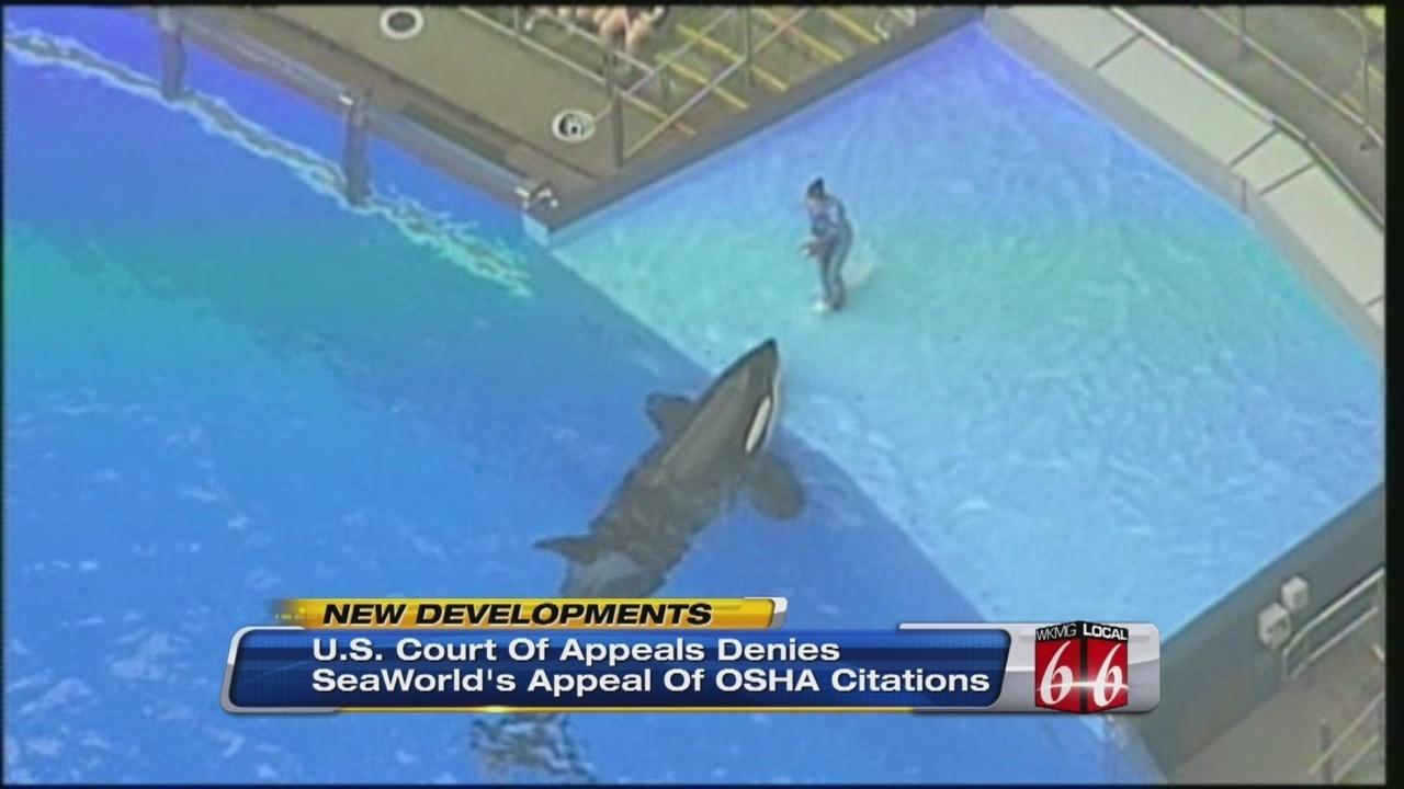 Court Denies SeaWorld Appeal Of OSHA Citations