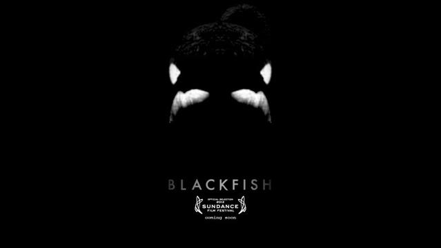 blackfish.jpg_18214688