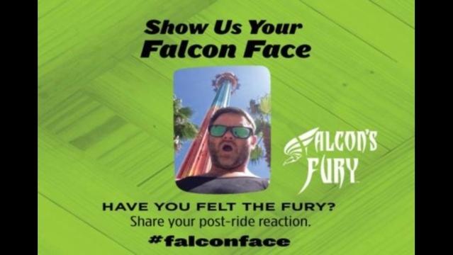falcon-face-jpg.jpg_27842192