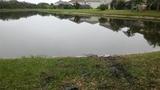 Alligator attacks man in Florida retention pond