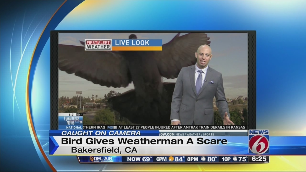 Bird gives weatherman a big scare