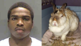 Florida man gets year in jail for setting rabbit's ears on fire
