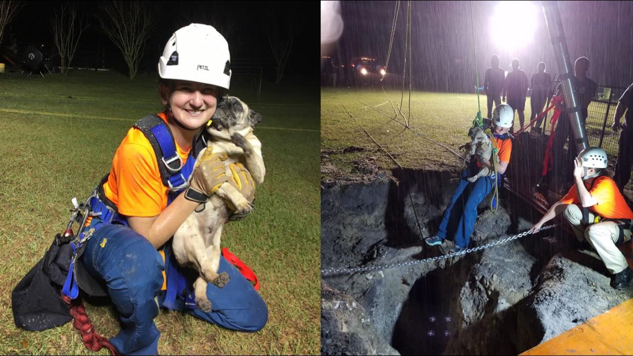 Gainesville Florida Dog Rescue