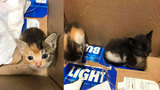 Kittens rescued from trash in Daytona Beach