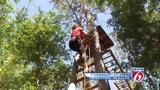 Tree Trek: Morning team vs. Night team