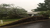 Storms swamp Central Florida, topple trees