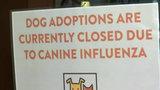 Dogs test positive for dog flu virus