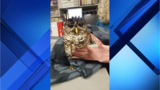 Flagler County Sheriff's deputies rescue injured owl